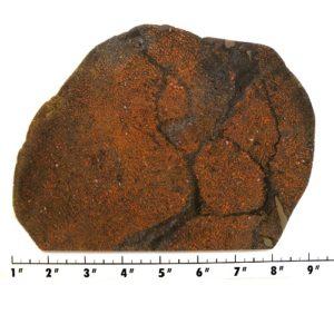 Slab1293 - Dinosaur Bone