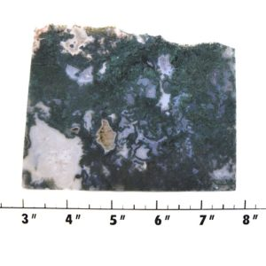 slab1436 - Green Moss Agate