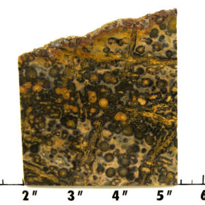 Slab341-Leopdard Skin Jasper