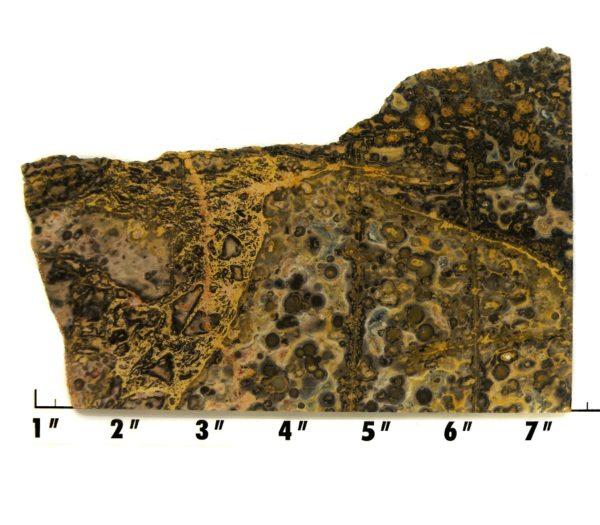 Slab426-Leopard Skin Jasper