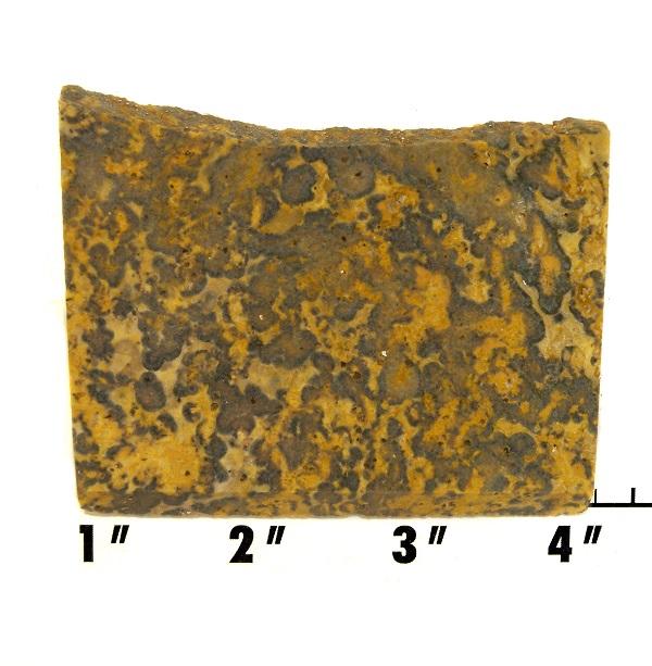 Slab449-Leopard Skin Jasper