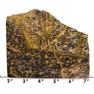 Slab456-Leopard Skin Jasper
