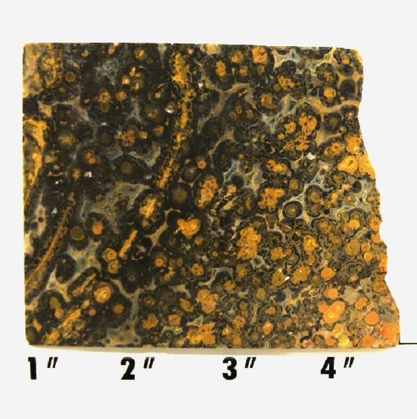 Slab345-Leopard Skin Jasper
