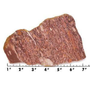 Slab589-Montana Bark Jasper