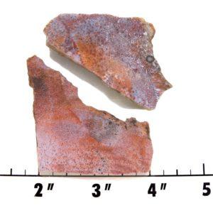 Slab1370-Fossil Fern