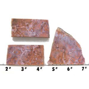 Slab1373-Fossil Fern