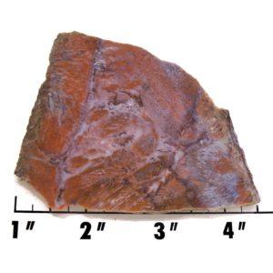 Slab1274-Fossil Fern