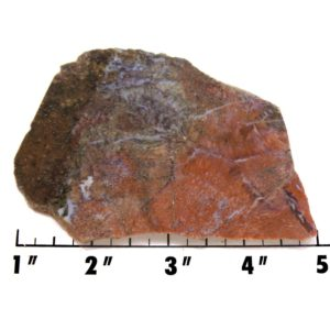 Slab1299-Fossil Fern
