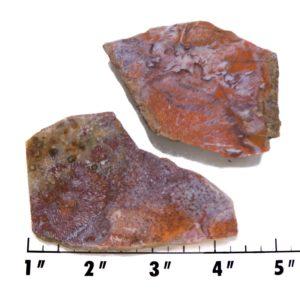 Slab1335-Fossil Fern