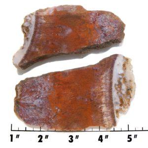Slab1354-Fossil Fern