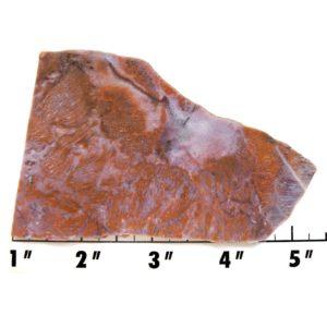 Slab1357-Fossil Fern