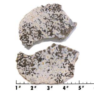 slab1038-Petrified Palmwood