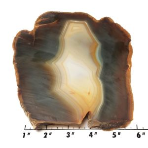 Piranha Agate Rough #11