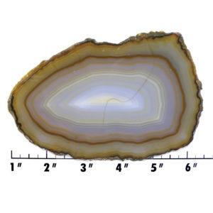 Slab305-Piranha Agate