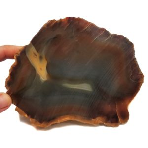 Piranha Agate Rough #15