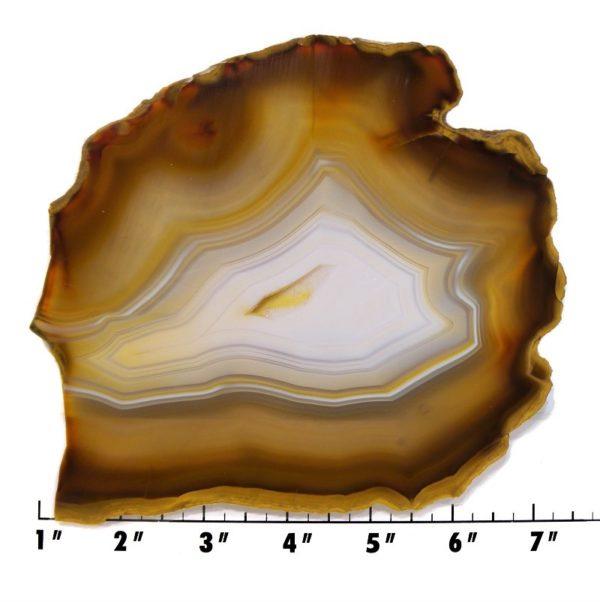 Slab710 - Piranha Agate