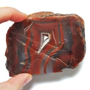 Piranha Agate Rough #19