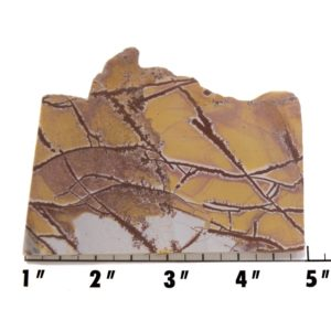 Slab1487-Sonoran Dendritic Jasper