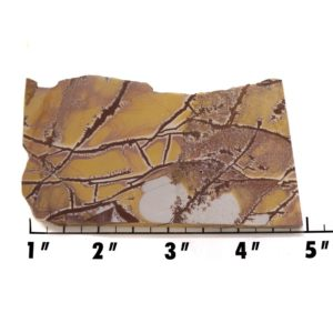 Slab1413-Sonoran Dendritic Jasper