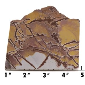 Slab1427-Sonoran Dendritic Jasper