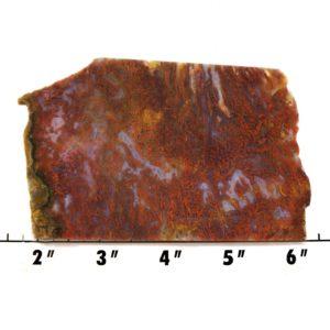 Slab1867 - Bloody Basin Agate