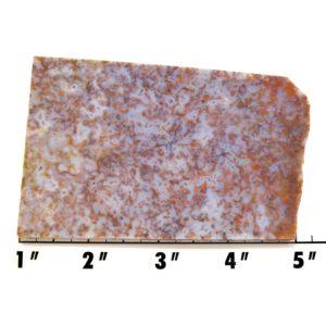 Slab1508-Cinco de Mayo Agate