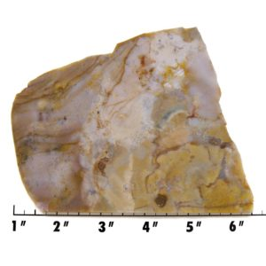 Slab1619-Fancy Jasper