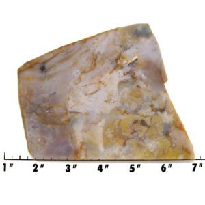 Slab1621-Fancy Jasper
