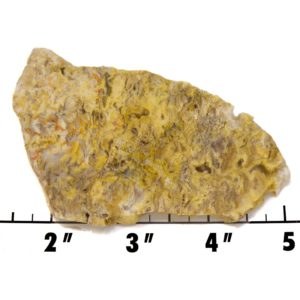 Slab1422 - Graveyard Point Plume Agate