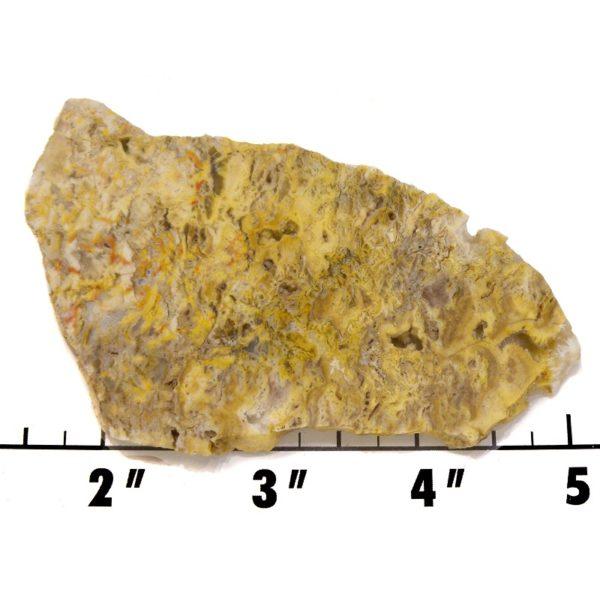 Slab1422 - Graveyard Point Plume Agate