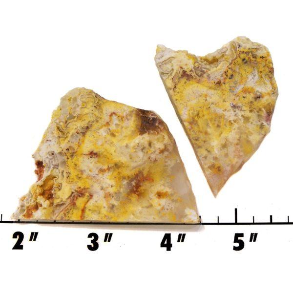 Slab1949 - Graveyard Point Plume Agate