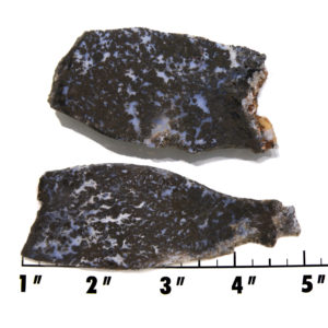 Slab1137 - Medicine Bow Plume Agate
