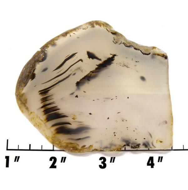 Slab1753 - Montana Agate