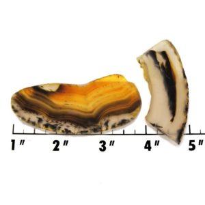 Slab1845 - Montana Agate