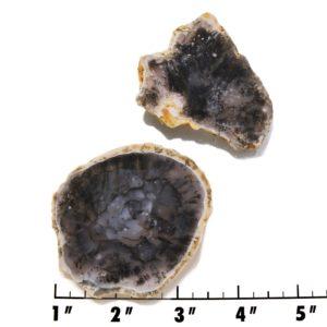 Slab1697-Moss Agate Slab