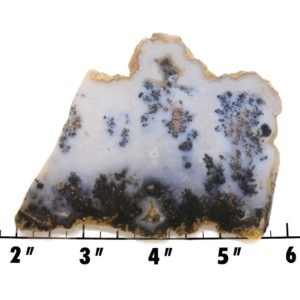 Slab2154-Parral Dendritic Agate