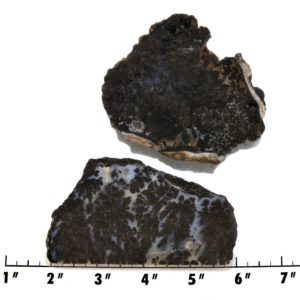 Slab2155-Parral Dendritic Agate