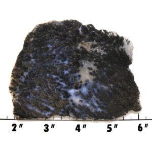 Slab2151-Parral Dendritic Agate