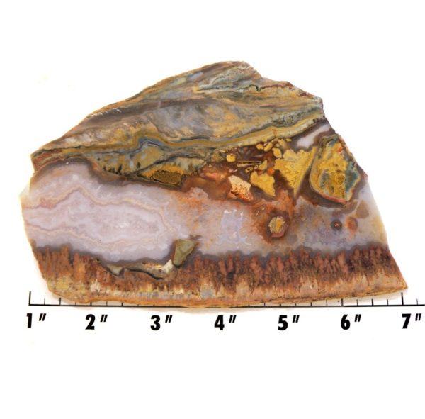 Slab103-Prudent Man Plume Agate
