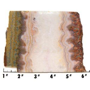 Slab141-Prudent Man Plume Agate