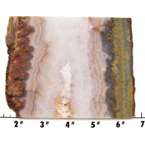 Slab110-Prudent Man Plume Agate