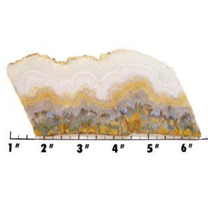 Slab121-Prudent Man Plume Agate