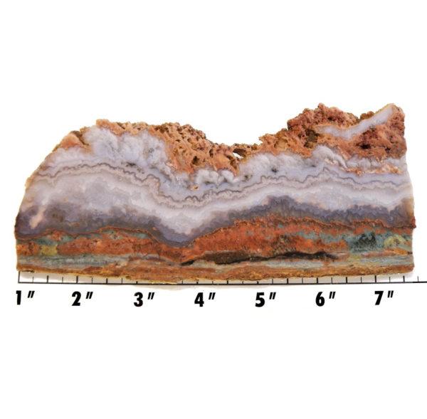 Slab127-Prudent Man Plume Agate