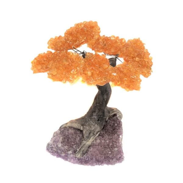 Amethyst Tree - 10 top