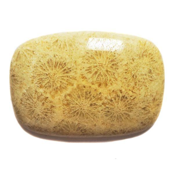 Cab55 - Petrified Coral Cabochon