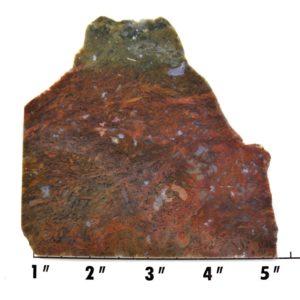 Slab1239 - Maury Mountain Moss Agate Slab