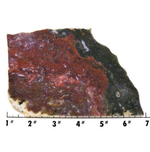 Slab1067 - Maury Mountain Moss Agate Slab