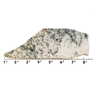 Slab2189 - Tree Agate