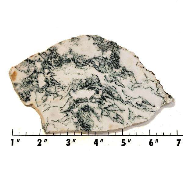 Slab2193 - Tree Agate