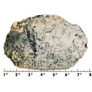 Slab2195 - Tree Agate